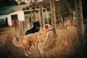 two dogs stand near a fence
